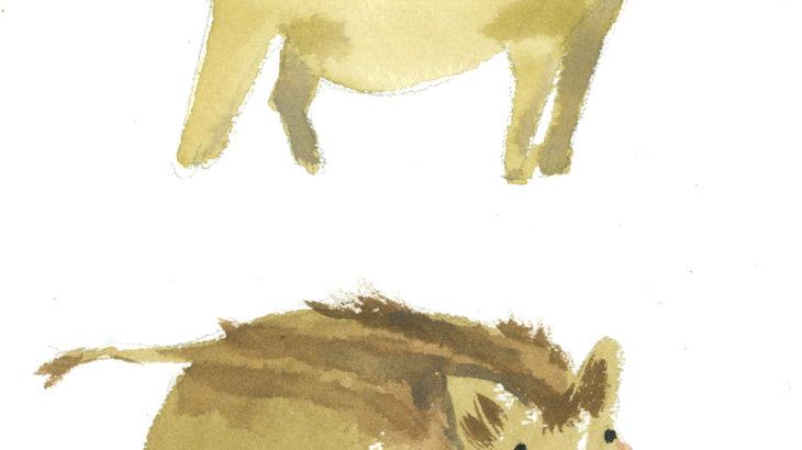 Wilde boars